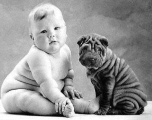 Ejemplos de analogias, es como se visualiza en la imagen, un perro con pliegues es como un bebé regordete.