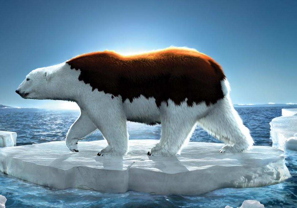 """La imagén es parte de los ejemplos de hipérbole, debido a que """"exagera"""" al querer demostrar que por el calentamiento global, hasta los osos polares se les derrite el pelaje blanco y en cambio les surge uno marrón, como los osos que viven en los bosques."""