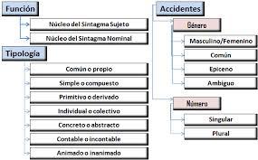 Sustantivos colectivos ejemplos, modificaciones