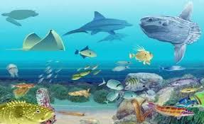 Ejemplos de ecosistemas, acuático