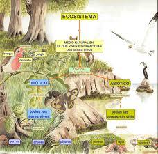 Ejemplos de ecosistemas, descripción