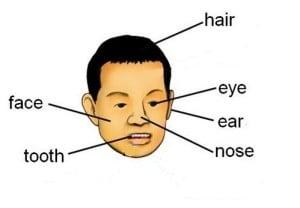 Partes del cuerpo en inglés, cabeza