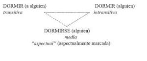 Clases de verbos, intransitivos y transitivos