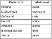 Sustantivos individuales, 70 ejemplos