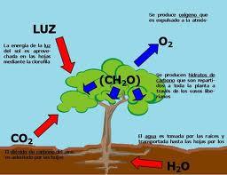 Ejemplos de energía química,  fenómenos químicos