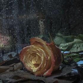 Frases de tristeza a causa de una muerte | Ejemplos de