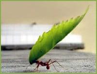 C mo eliminar las hormigas ejemplos de - Como eliminar las hormigas de la cocina ...