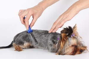 Cómo eliminar las pulgas Del perro