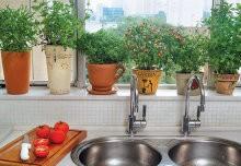 Plantas aromáticas Para interiores