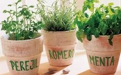 Plantas aromáticas:  cómo cultivarlas