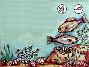 Animales ovíparos:  Los peces