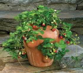C mo cultivar fresas ejemplos de - Plantar en maceta ...