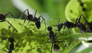 Eliminar hormigas Del jardín