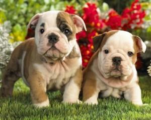 Nombres de perras Comenzando con c