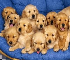 Nombres de perras:   Listado