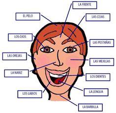 Partes del cuerpo humano : la cabeza