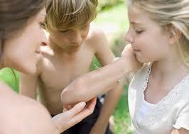 Picaduras de pulgas:  Como curarlas