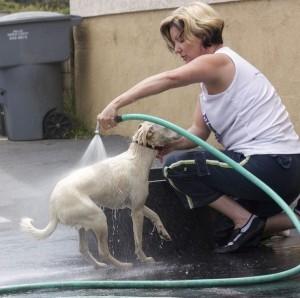 C mo eliminar las pulgas de mi perro ejemplos de - Como erradicar las pulgas ...