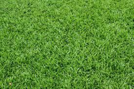 Hierva o hierba