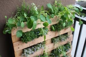 Cómo hacer jardines verticales
