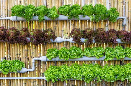 C mo hacer jardines verticales ejemplos de for Materiales para jardines verticales
