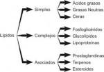 Cómo se clasifican los lípidos