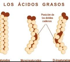 Lípidos saturados e insaturados
