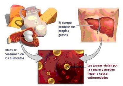 ejemplos de esteroides biologia