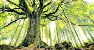 edad del árbol