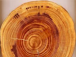 Cómo saber la edad de un árbol